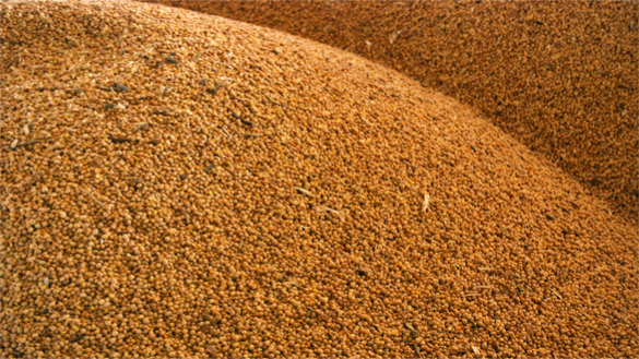 Chinese Purchase 1 Million Tons U.S. Soybeans