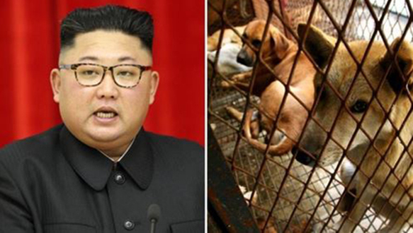 North Korean leader Kim Jong-un Orders Pet Dogs Confiscated