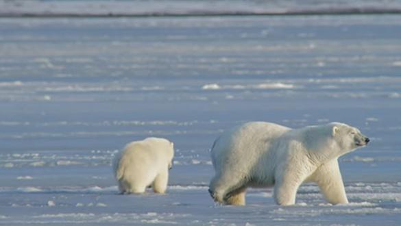 Uncertainty Surrounding Arctic Refuge Drilling