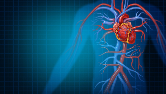 Seven Health Indicators that Help Predict the Risk of Developing Heart Disease