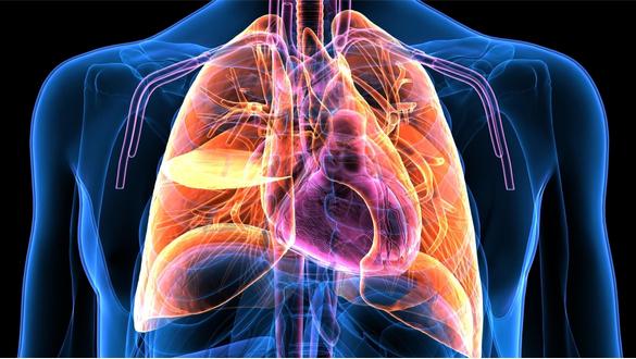 Glucosamine Supplements May Reduce Cardiovascular Risk