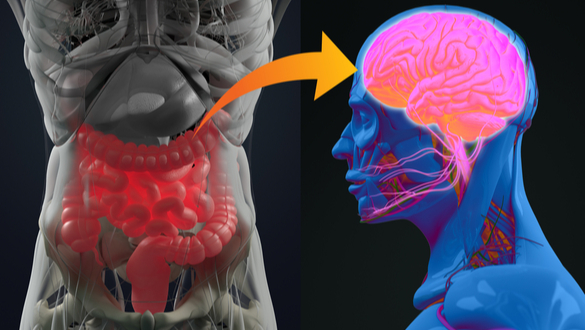 Researchers Confirm Link Between Gut Microbiota and the Brain