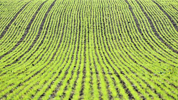 Stock Scorecard: Monsanto (MON)